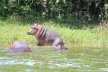 Hippo2016.1