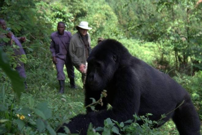 gorilla-get-close-2