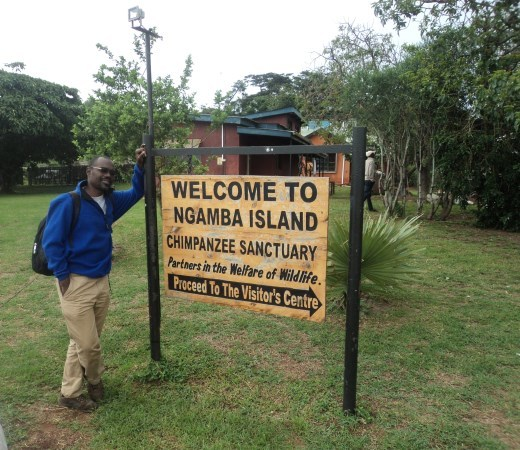 Ngamba Island -Chimp viewing and Birding